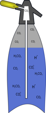 Concentration Of Carbonic Acid In Soft Drinks