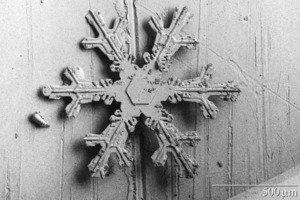 Dendritic Snow Crystal