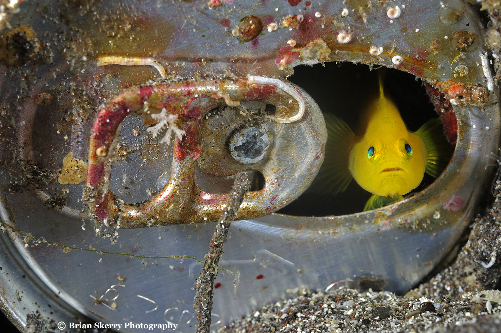 Gobi in a can by Brian Skerry