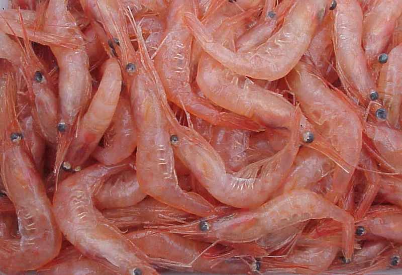 A heap of Pandalus borealis shrimp.