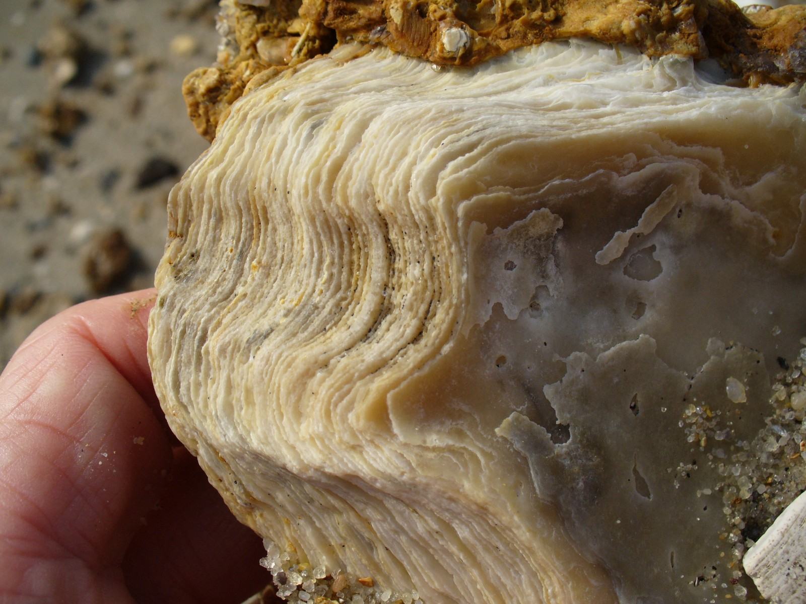 Layers in an oyster shell