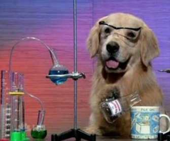 Dog scientist