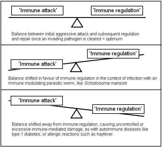 Immunological balancing act between destruction and regulation
