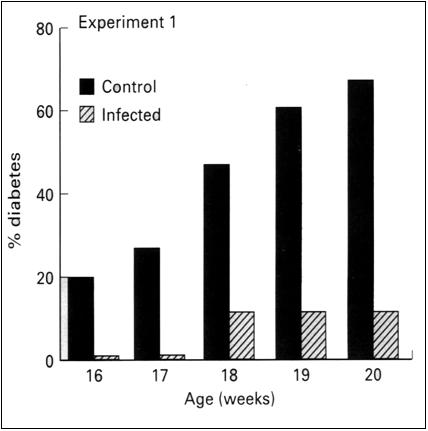Effect of S. mansoni on diabetes in NOD mice