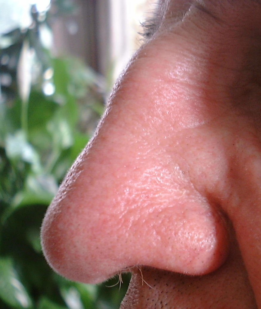 The Human Nose