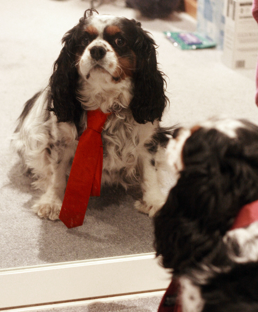 Red power tie dog