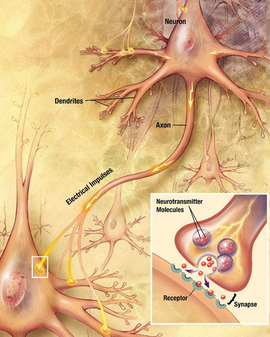 Chemical nerve synapse