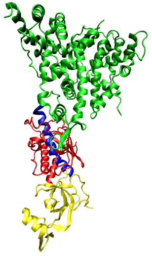 One molecule of the Dicer-homolog protein from Giardia intestinalis