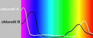 Chlorophyll absorption spectra