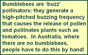 Comment 2 - Buzz pollinators