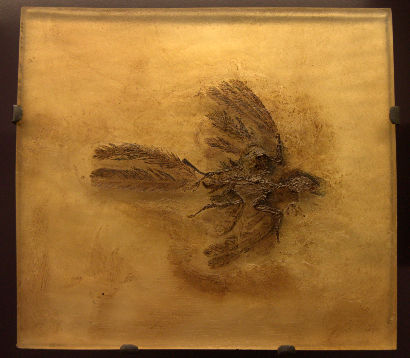 Fossil of Parargarnis - an insectivorous bird that was similar to present day hummingbirds