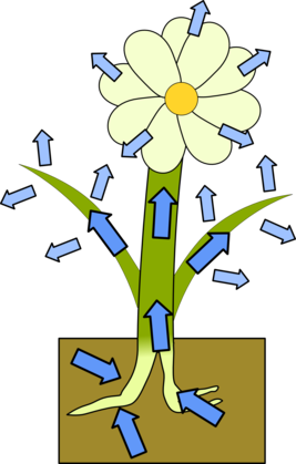 A plant in soil