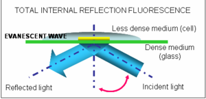 Total internal reflection fluorescence microscopy: Total internal reflection occurs when a light beam travelling through a dense medium, such as glass, hits an interface with a less dense medium, such as water (or the inside of a cell) at an angle greater than a certain critical angle. All the light is reflected but some of the light energy propagates a very short distance into the less dense medium, generating the so called evanescent wave. This is then used to excite fluorescent molecules. Because the intensity of the evanescent field decays exponentially with distance, it only penetrates a few nanometers into the sample, making it possible to observe single molecules. Images are collected in real-time at a video rate using special cameras (intensified CCD cameras).