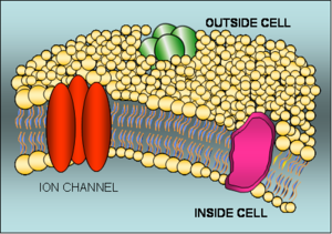 Cell Membrane Ion Channel Mosaic