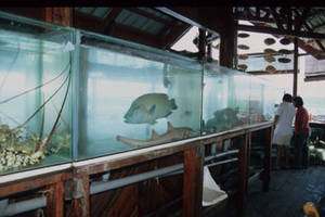 Live Reef Fish Restaurant