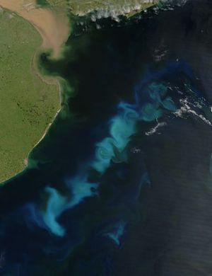 A phytoplankton bloom