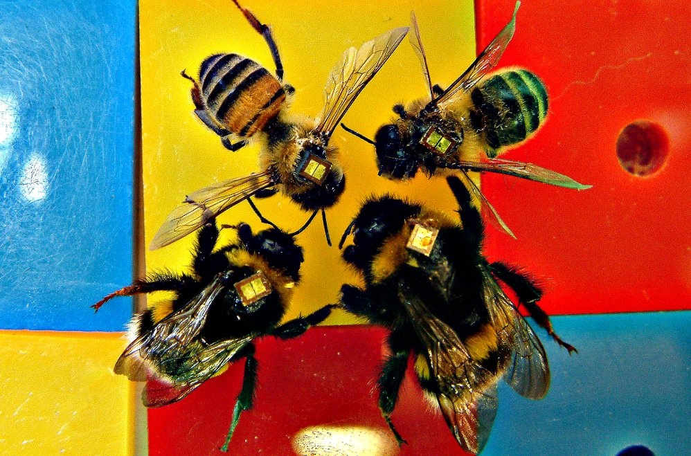 In a beehive, it is thought that a mixture of inquisive and cautious personalities allow for a better division of roles, meaning the whole hive can prosper.