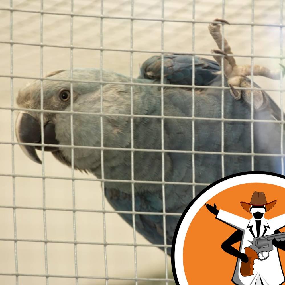 Captive breeding