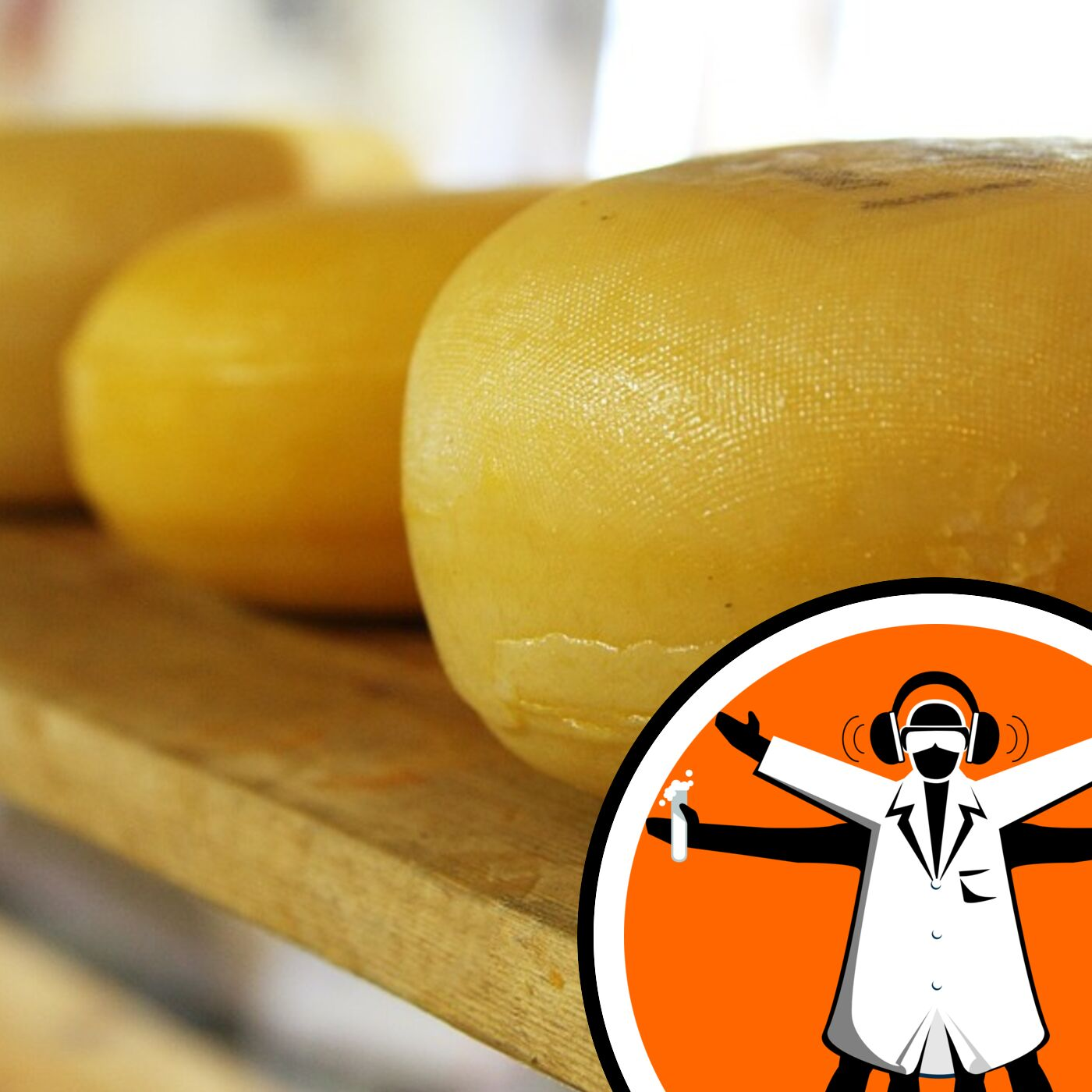 Industrial yeast impairs gut wound healing