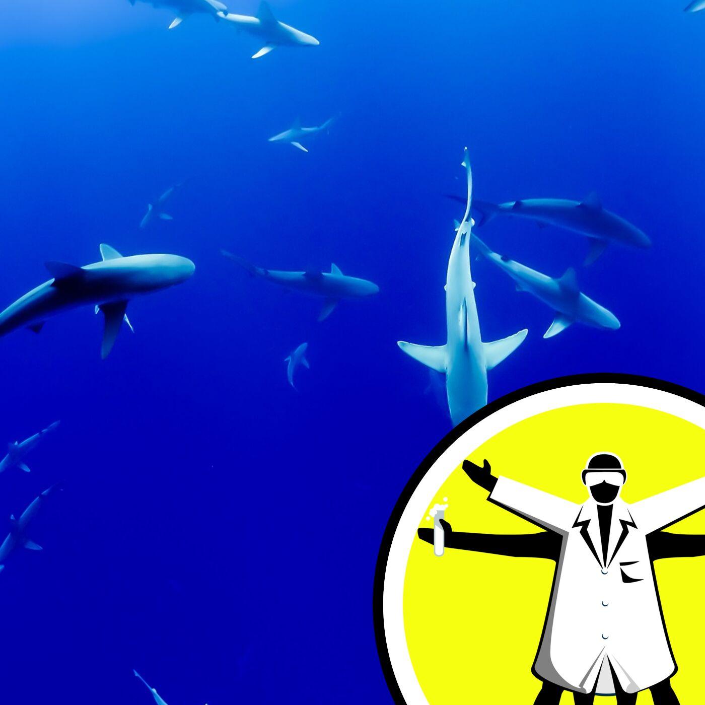 Secret Lives of Sharks