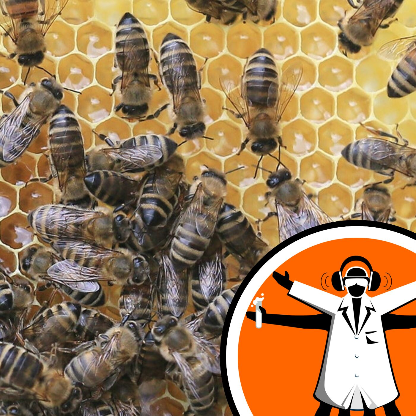 Pesticide antidote might help struggling bees