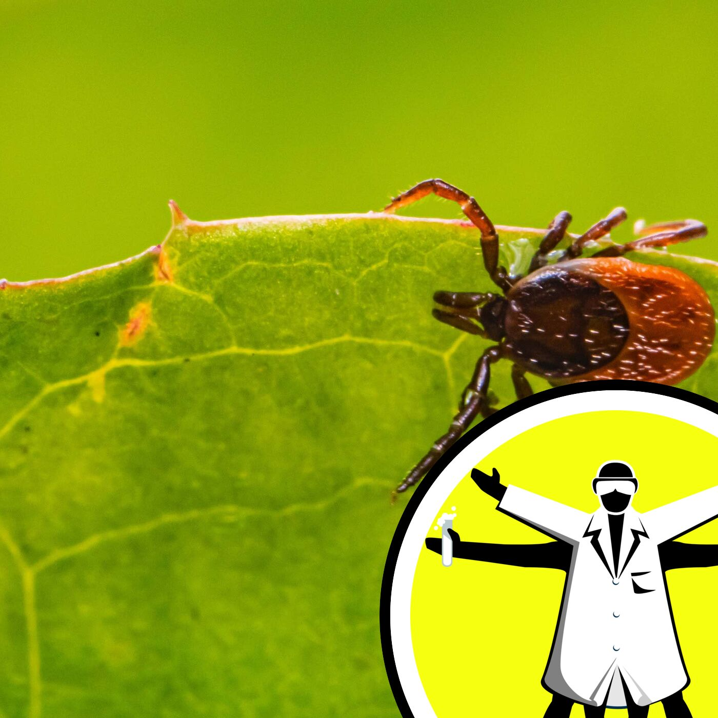 Lyme Disease: Ticks, Trends, and Treatment