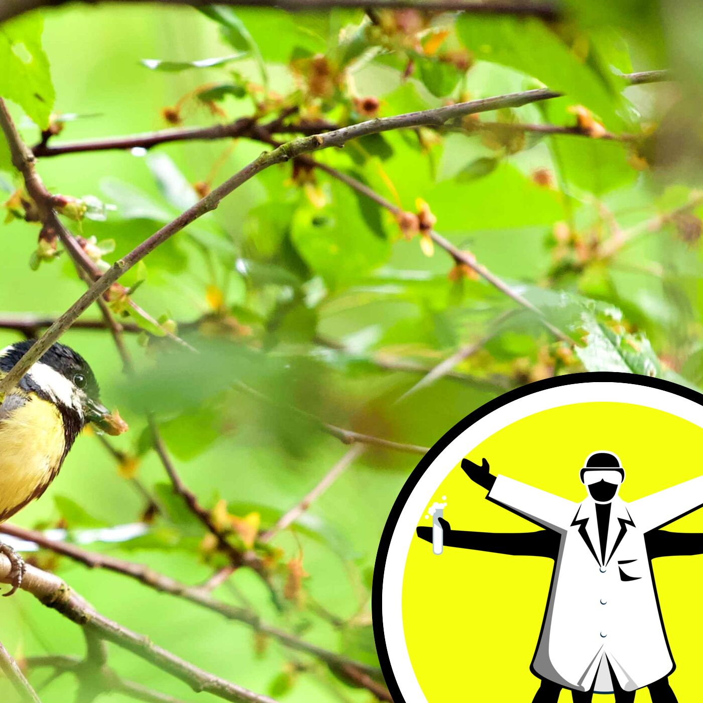 The Science of Songbirds