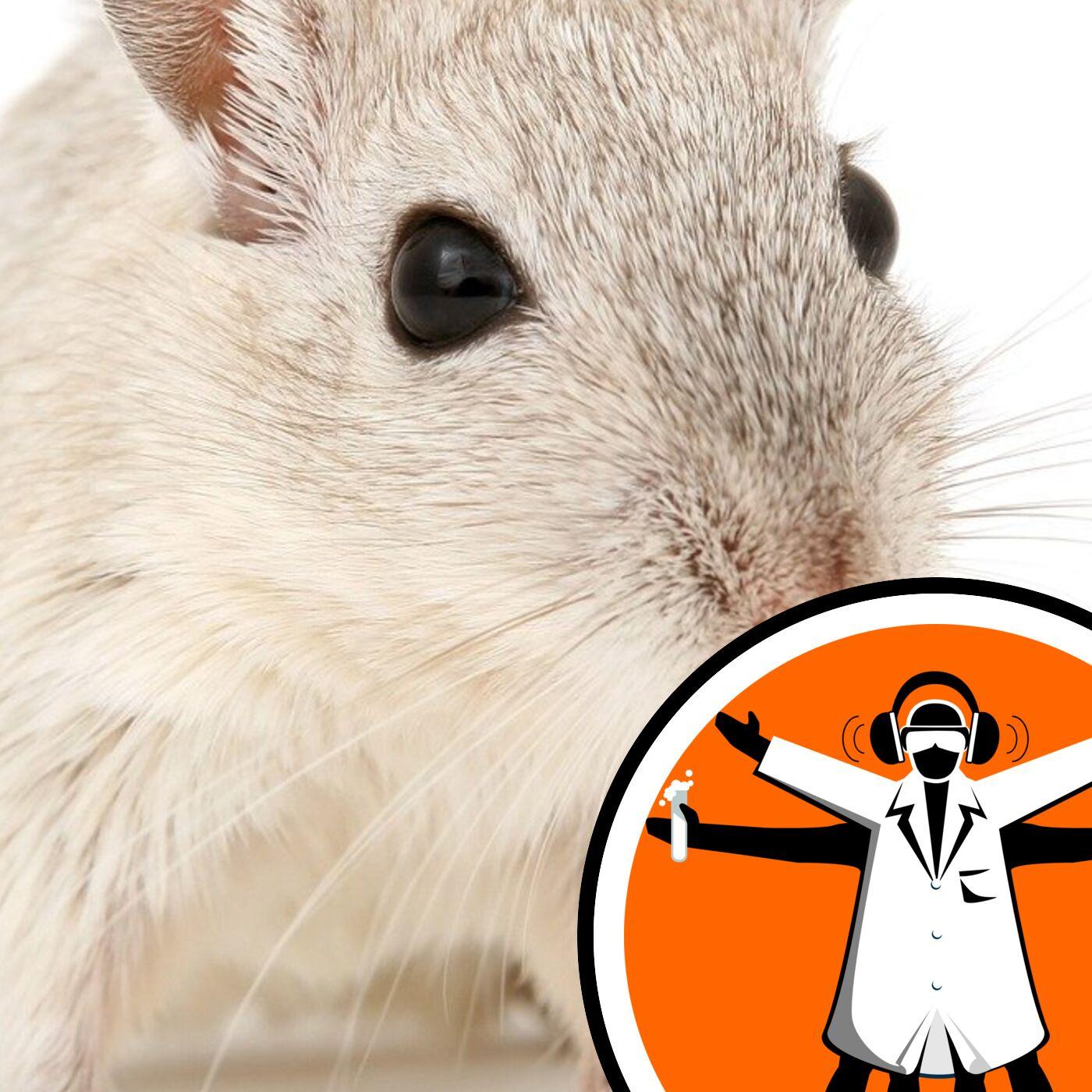 Mouse plague in Australia