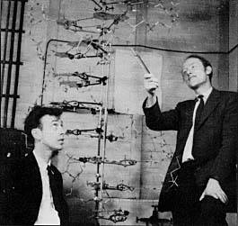 Figure 1: Watson & Crick with their double-helix model of DNA