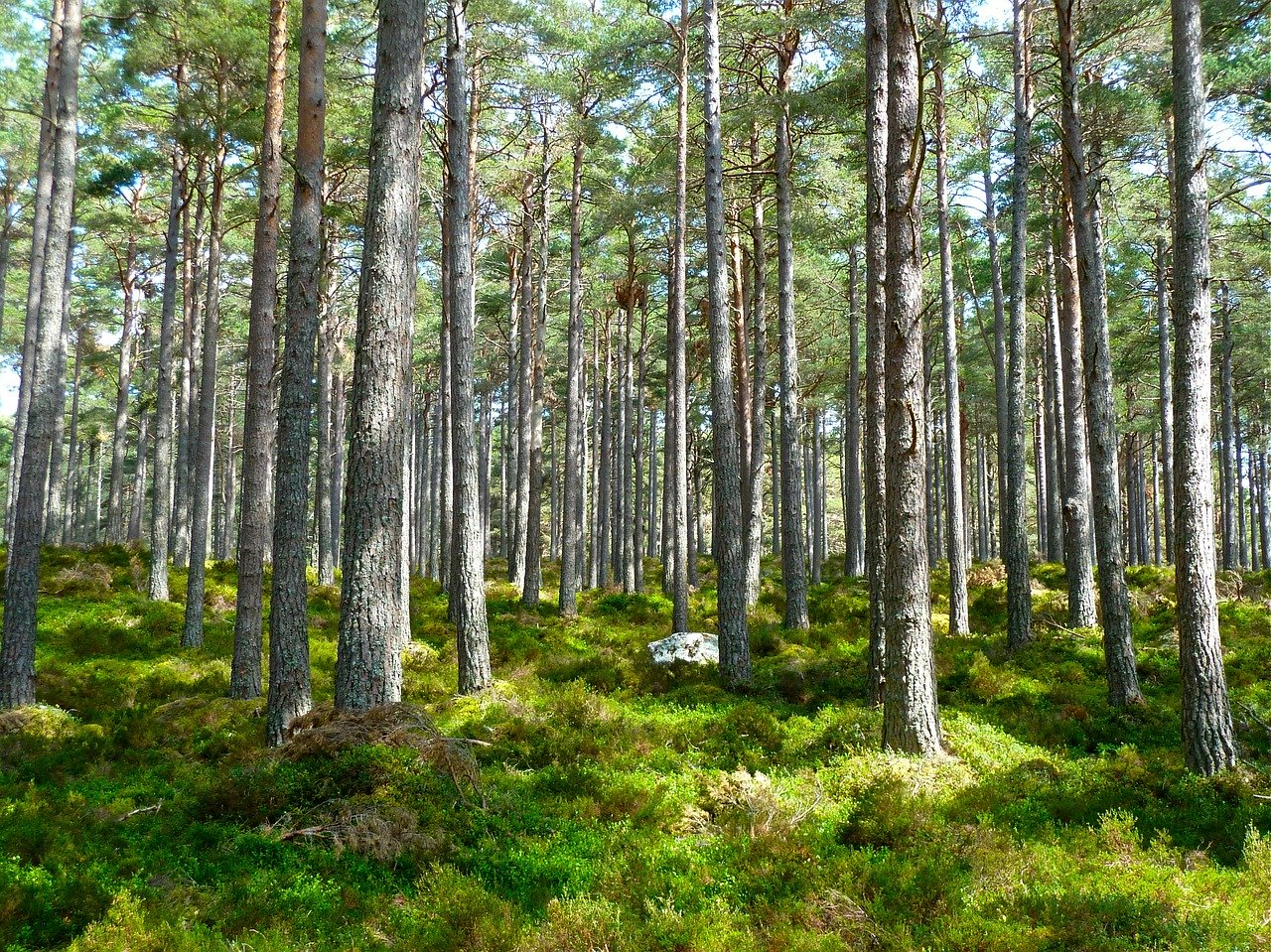 photograph of a forest