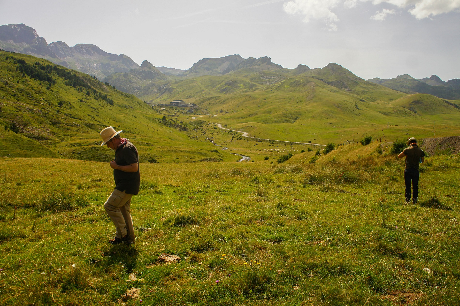 Hunting grasshoppers in the Pyrenees