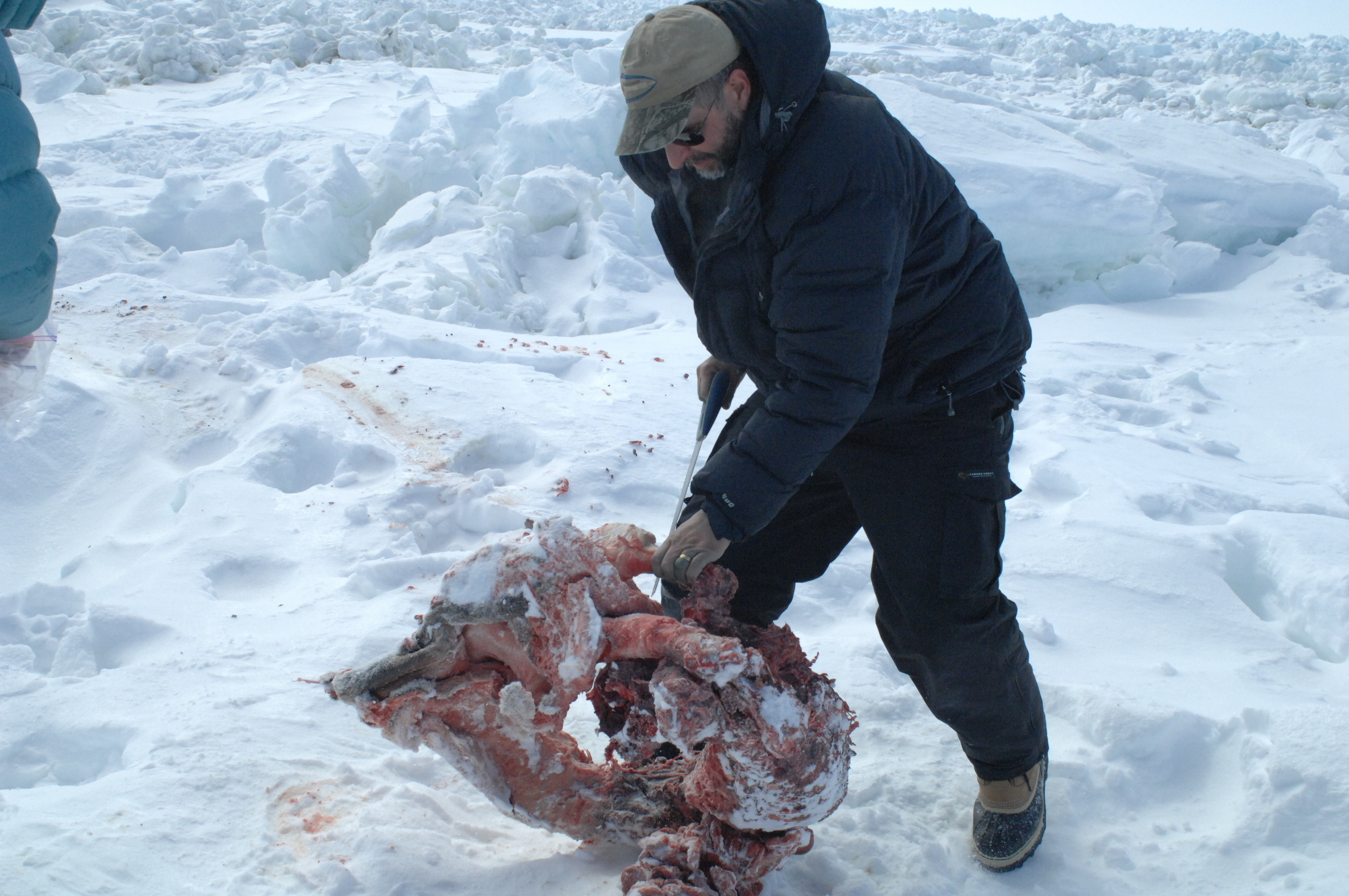 Andrew with a seal kill.