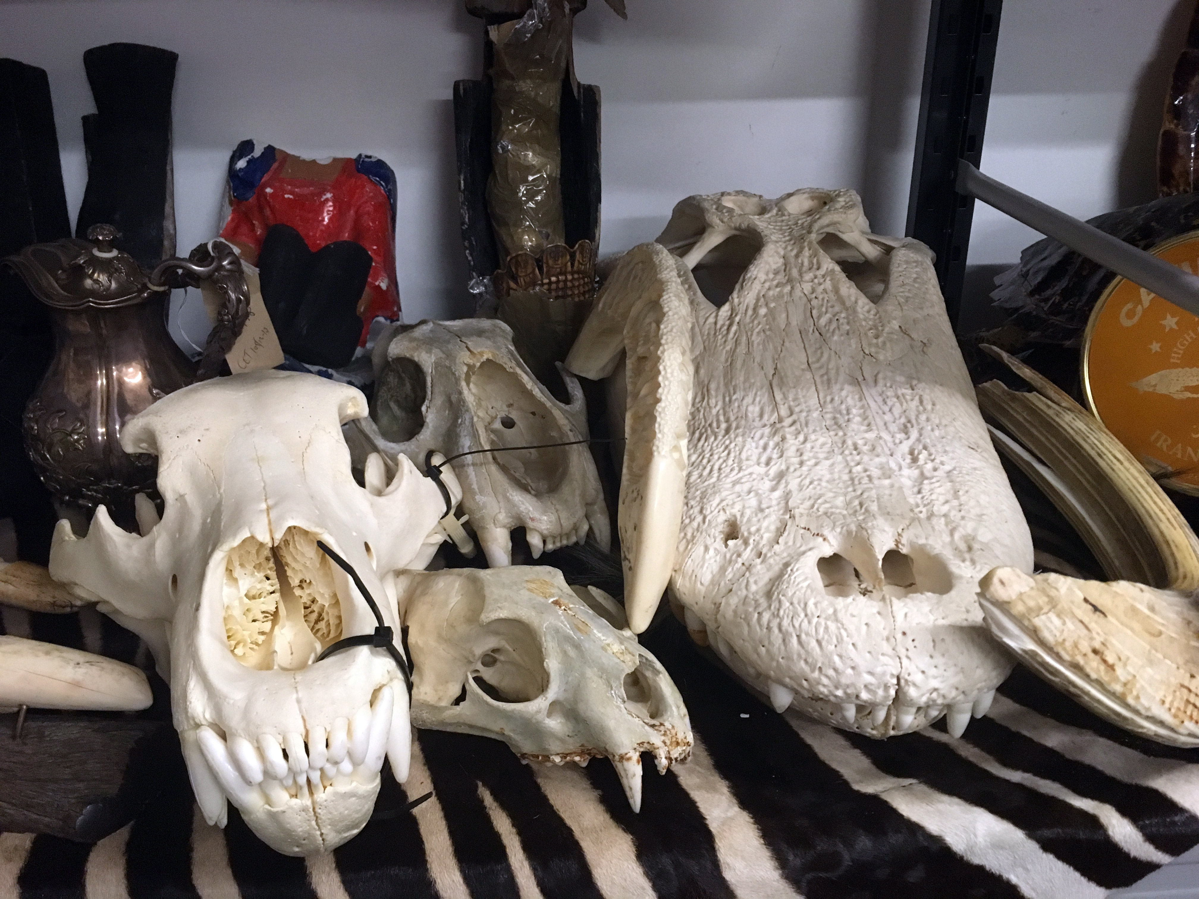 Reptile skins and skulls apprehended at Heathrow.