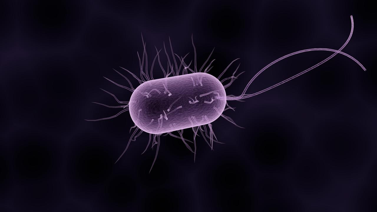 Artist's impression of a bacterium