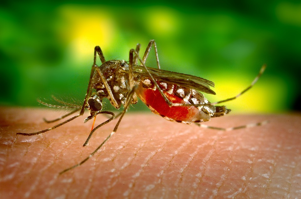 The image shows a mosquito biting a human.