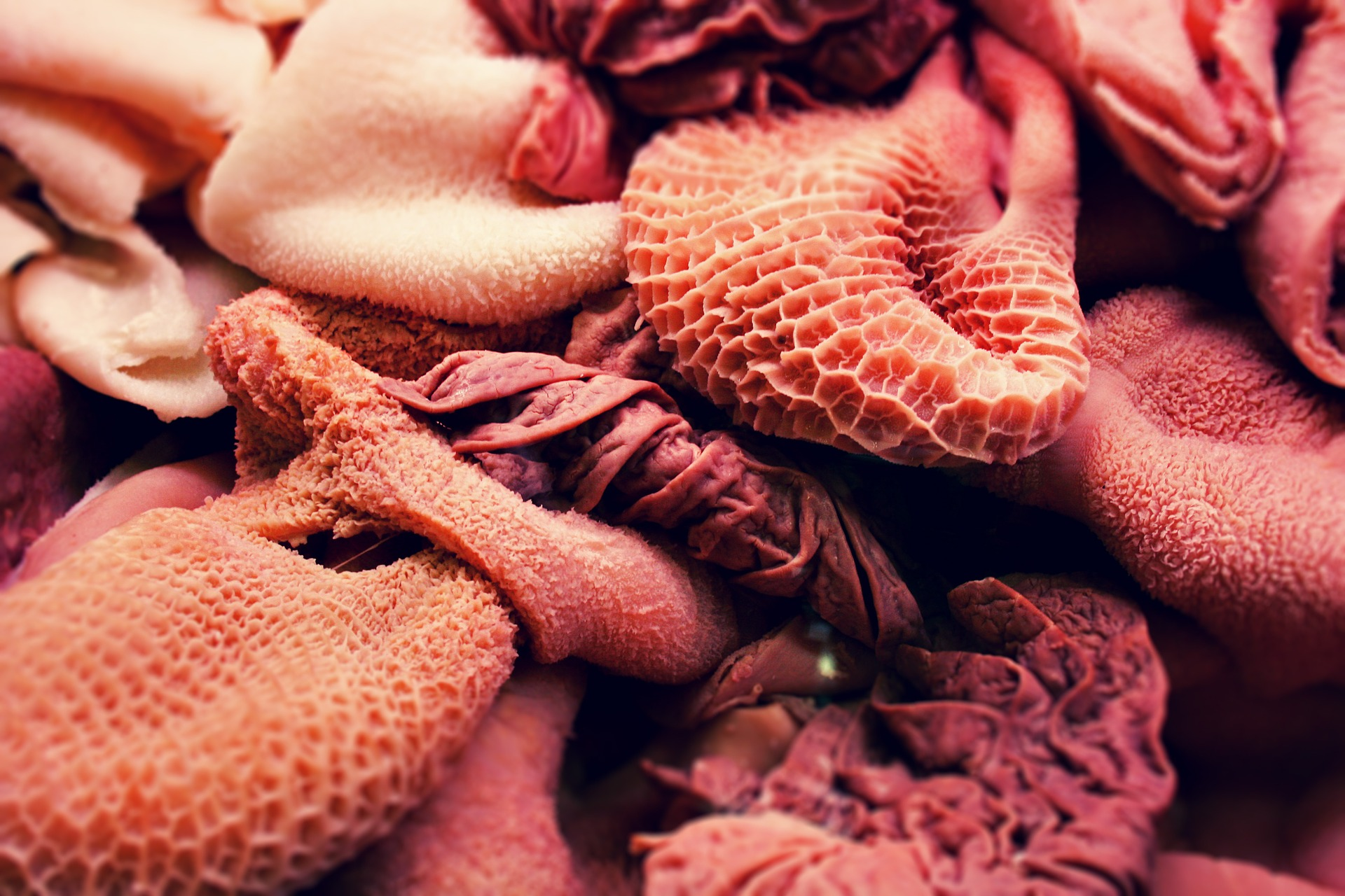 A selection of raw offal