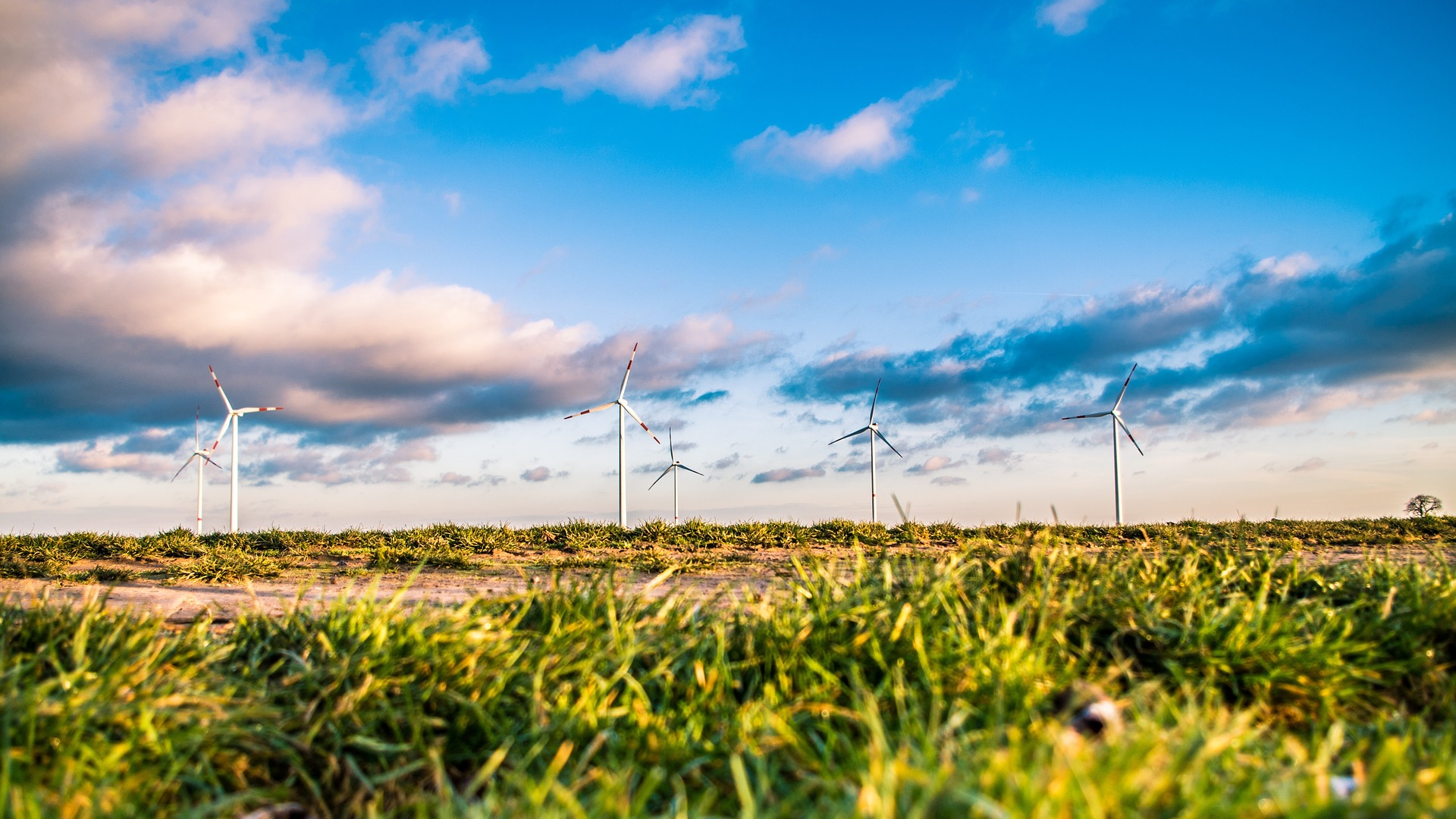 Wind farm surrounded by grass