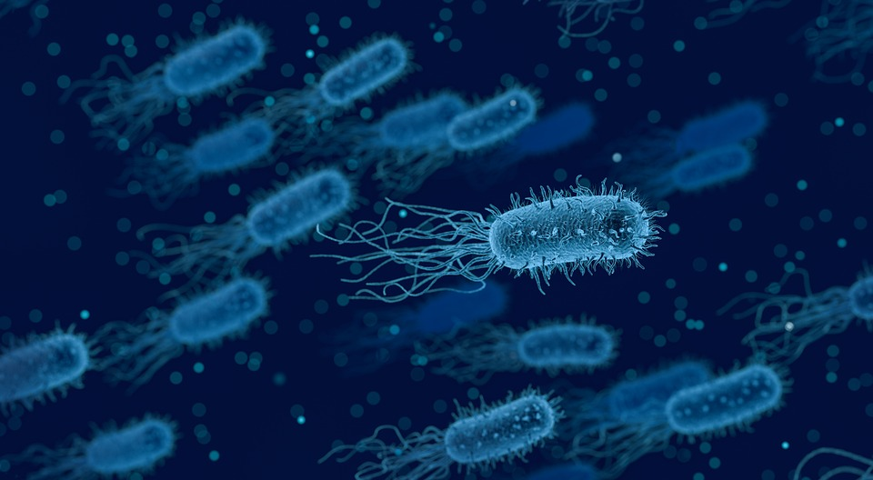 Artists impression of bacteria