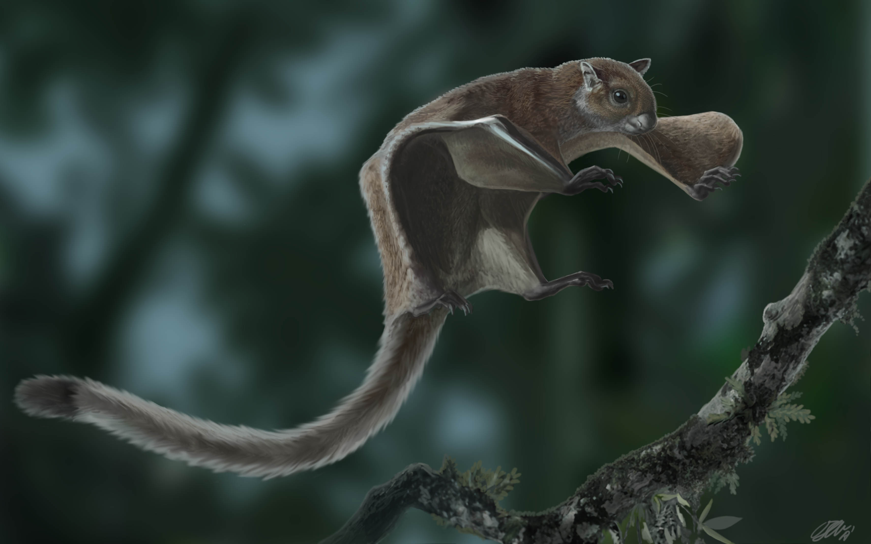 Reconstruction of the 11.6-million-year-old fossil flying squirrel Miopetaurista neogrivensis.