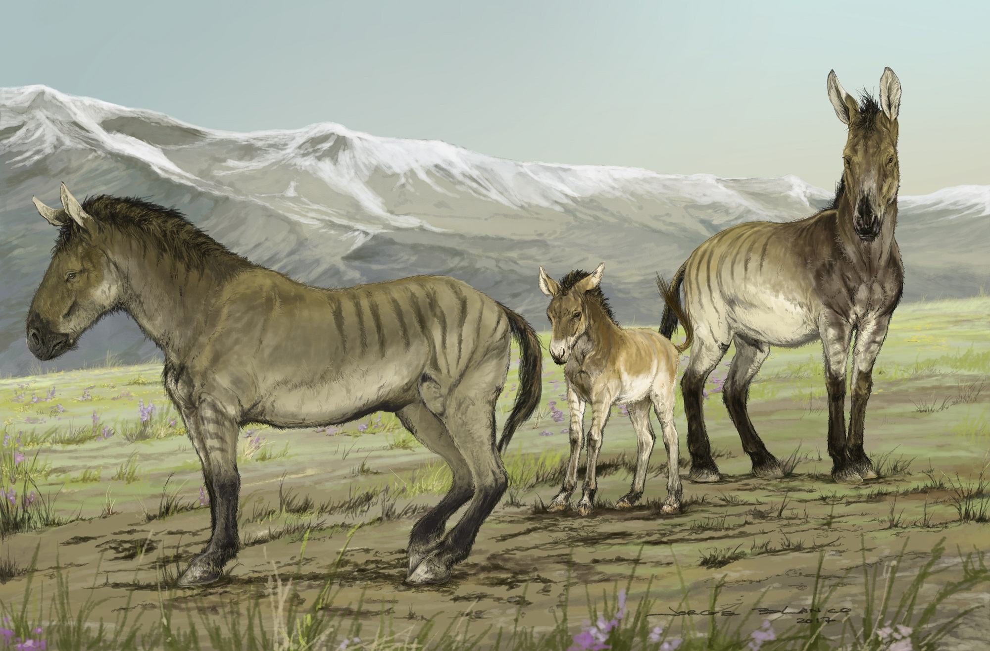 A family of stilt-legged equids (Haringtonhippus francisci) in Yukon, Canada during the last ice age.