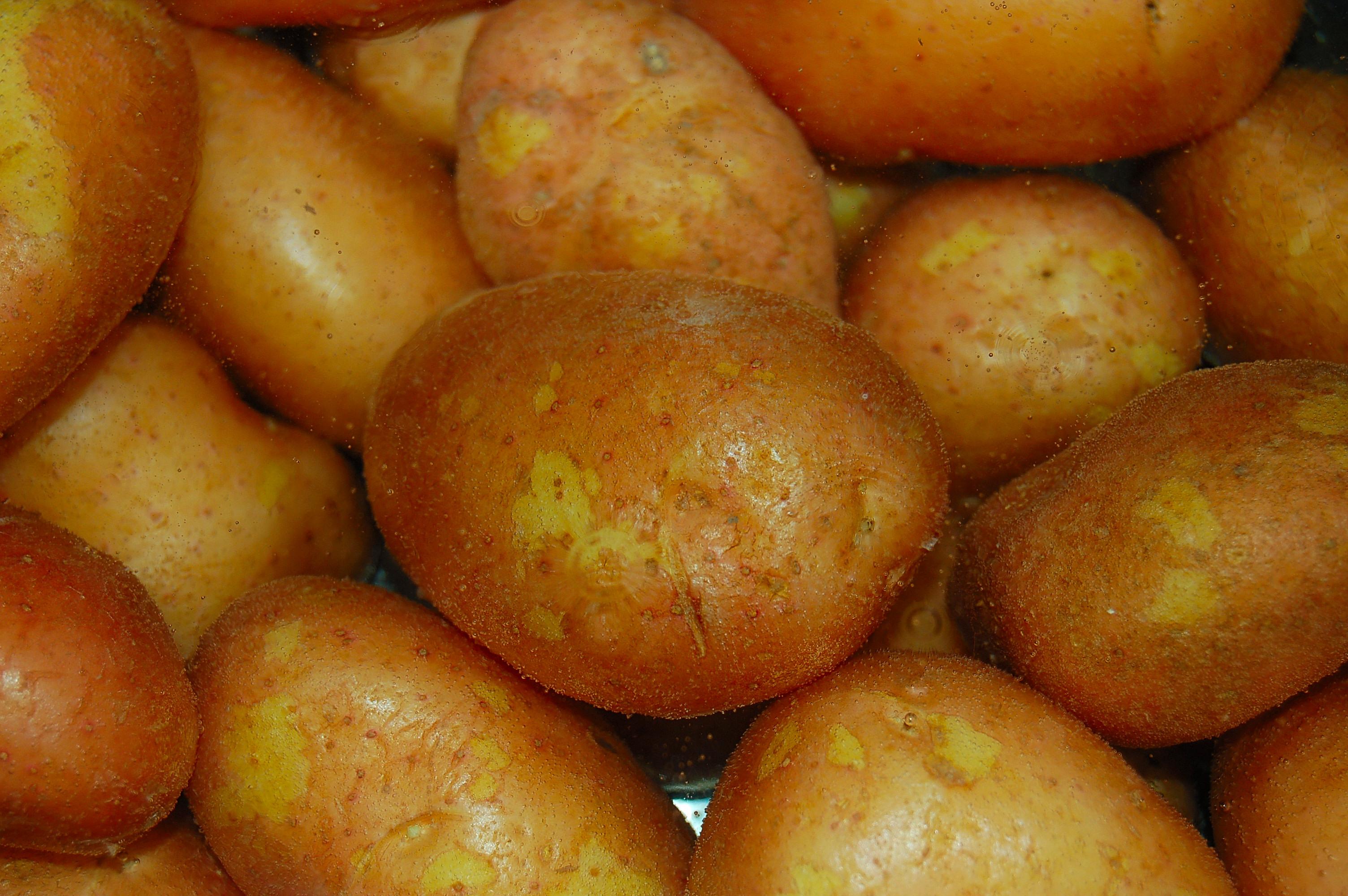 Bio-plastics: Turning Wheat And Potatoes into Plastics | Science