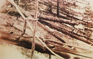 The aftermath of the tunguska meteorite