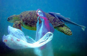 Turtle and plastic bags