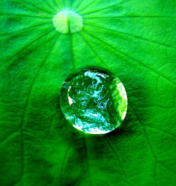 A drop of water on a leaf.
