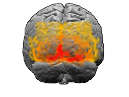 Visual Cortex (in red)