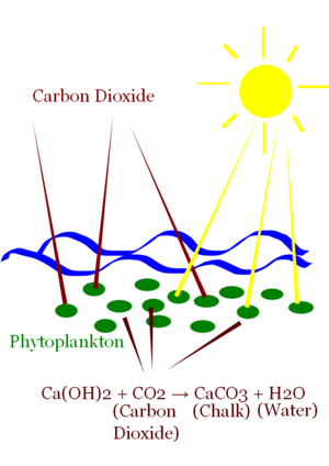 Phytoplankton capture Carbon