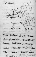 Page from Dawins notebooks showing an evolutionary tree