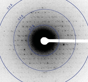 Very cold weak electron beams have been used to collect large numbers of diffraction patterns from protein microcrystals.