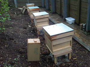 Urban Beekeeping - Hives
