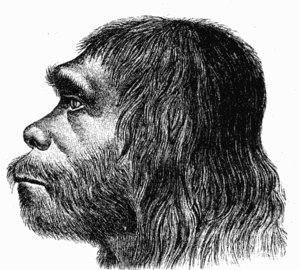 Neanderthal reconstruction